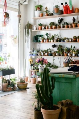 Cool Small Cactus Ideas For Home Decoration 45