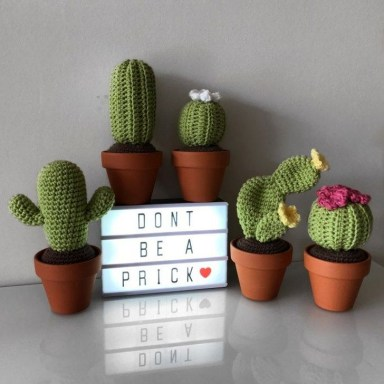 Cool Small Cactus Ideas For Home Decoration 46