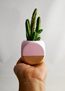 Cool Small Cactus Ideas For Home Decoration 48