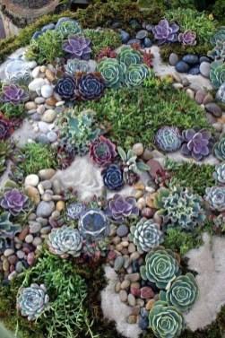 Best Ideas For Garden Succulent Landscaping 12