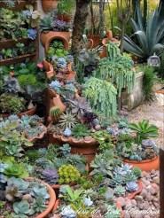 Best Ideas For Garden Succulent Landscaping 34