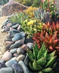 Best Ideas For Garden Succulent Landscaping 35