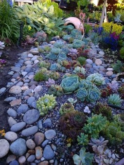 Best Ideas For Garden Succulent Landscaping 39