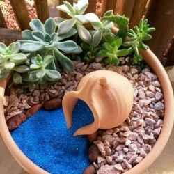 Best Ideas For Garden Succulent Landscaping 42