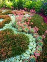 Best Ideas For Garden Succulent Landscaping 43