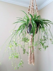 Modern Plant In Pot Ideas For Your House Decoration 04