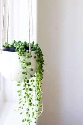 Modern Plant In Pot Ideas For Your House Decoration 07