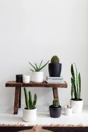 Modern Plant In Pot Ideas For Your House Decoration 12