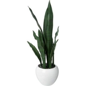 Modern Plant In Pot Ideas For Your House Decoration 32