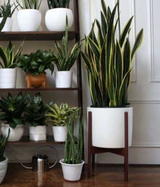 Modern Plant In Pot Ideas For Your House Decoration 33