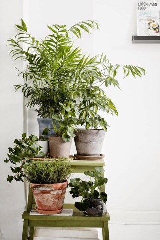 Modern Plant In Pot Ideas For Your House Decoration 37