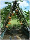 Extraordinary Vegetables Garden Ideas For Backyard 22