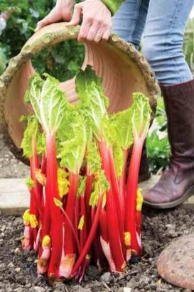 Extraordinary Vegetables Garden Ideas For Backyard 24