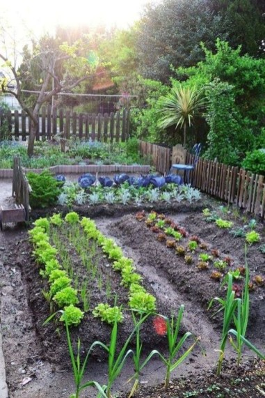 Extraordinary Vegetables Garden Ideas For Backyard 28