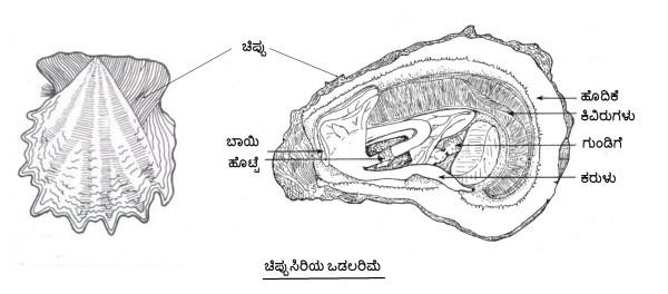 Thitta 2