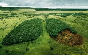 ಕಾಡು, ಹಸಿರು, forest, green