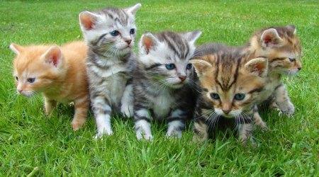cats, kitten, ಬೆಕ್ಕು