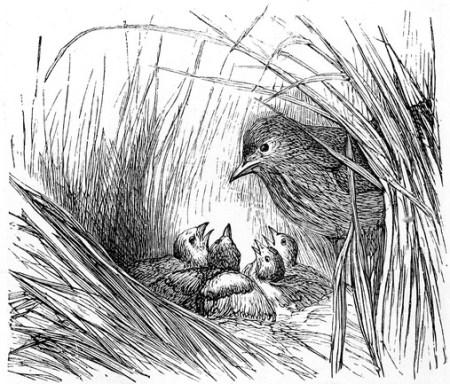bird, bird family, children's poem. ಕಾಡು ಹಕ್ಕಿಯ ಕತೆ