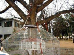 ಆಲದ ಮರ, Banyan Tree