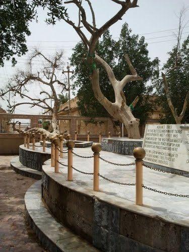 The Tree of Knowledge, Adam's tree. ಬೈಬಲ್ ಕಾಲದ 'ಟ್ರೀ ಆಪ್ ಆಡಮ್', ಗ್ನಾನದ ಮರ