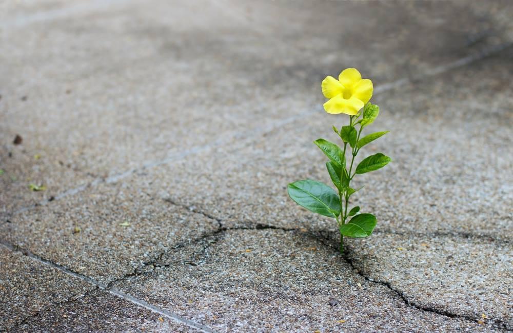 ಬರವಸೆ, hope