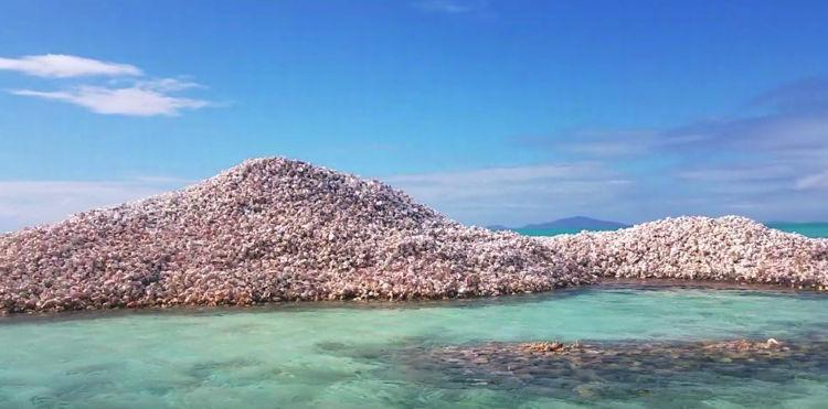 Conch Shells ಶಂಕ ಧ್ವೀಪ