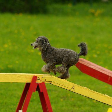 Vervolg cursus hond online