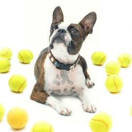 Welke spelletjes adviseren wij om wel of niet om kinderen met een hond/pup te laten doen