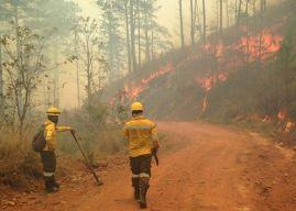 Incendios forestales han consumido más de 40 mil hectáreas de bosque