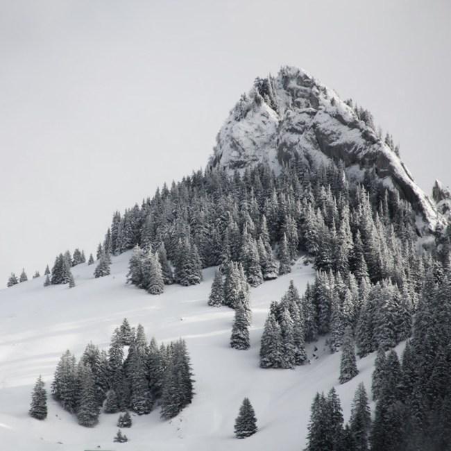bois maison aujourd'hui clt utilisation forêt écologie montagne neige