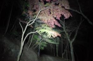 照らされた紅葉