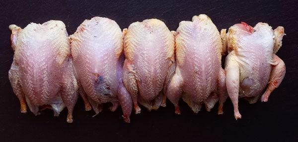 plucked quail