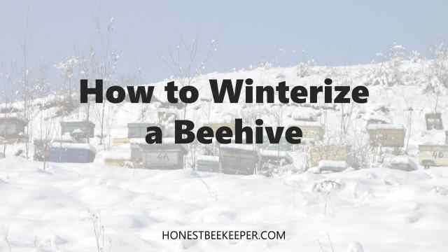 How to winterize a beehive- Honest Beekeeper