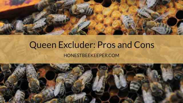 Queen Excluder Pros and Cons