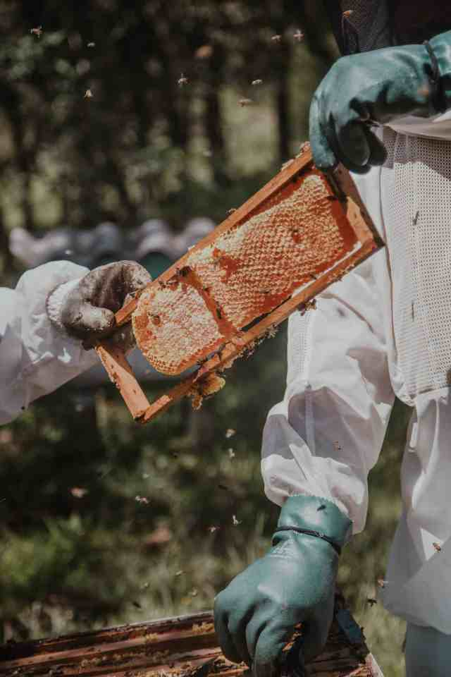 How to get Honey from a Beehive without Getting Stung