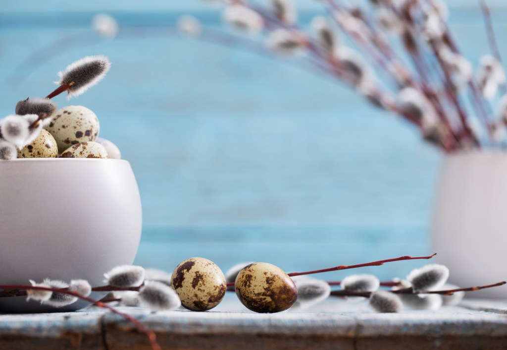 Pussy willows and quail eggs on a blue background