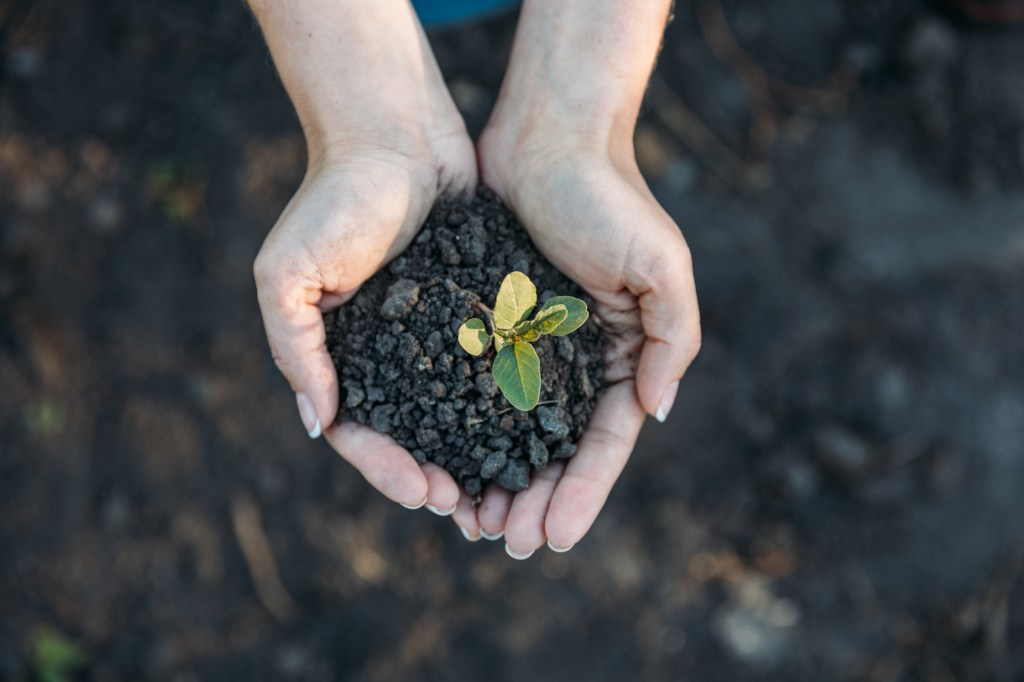 Woman holding dirt in her hands with a seedling on top