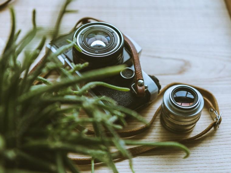 Retro camera with plants