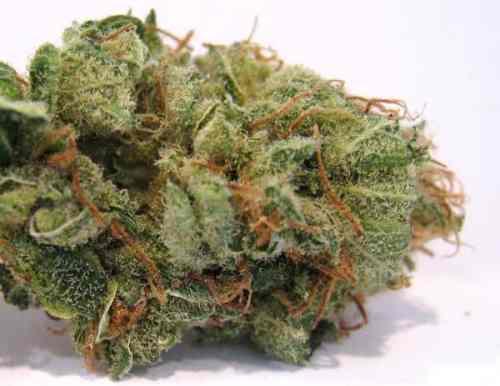 The 50 Best Weed Strains - Honest Marijuana