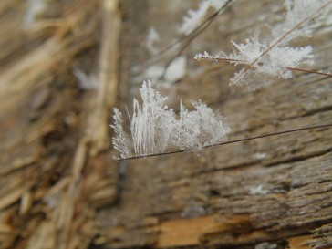 Like on this horse hair that was attached to a shed