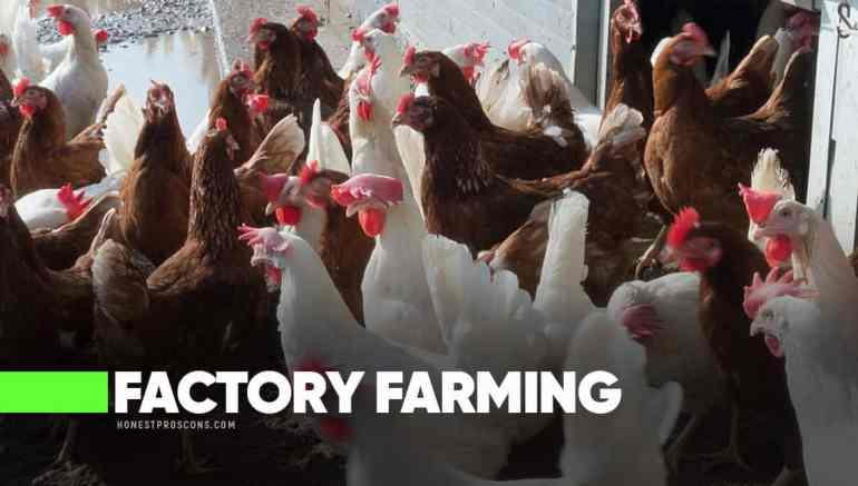 Factory Farming Pros Cons