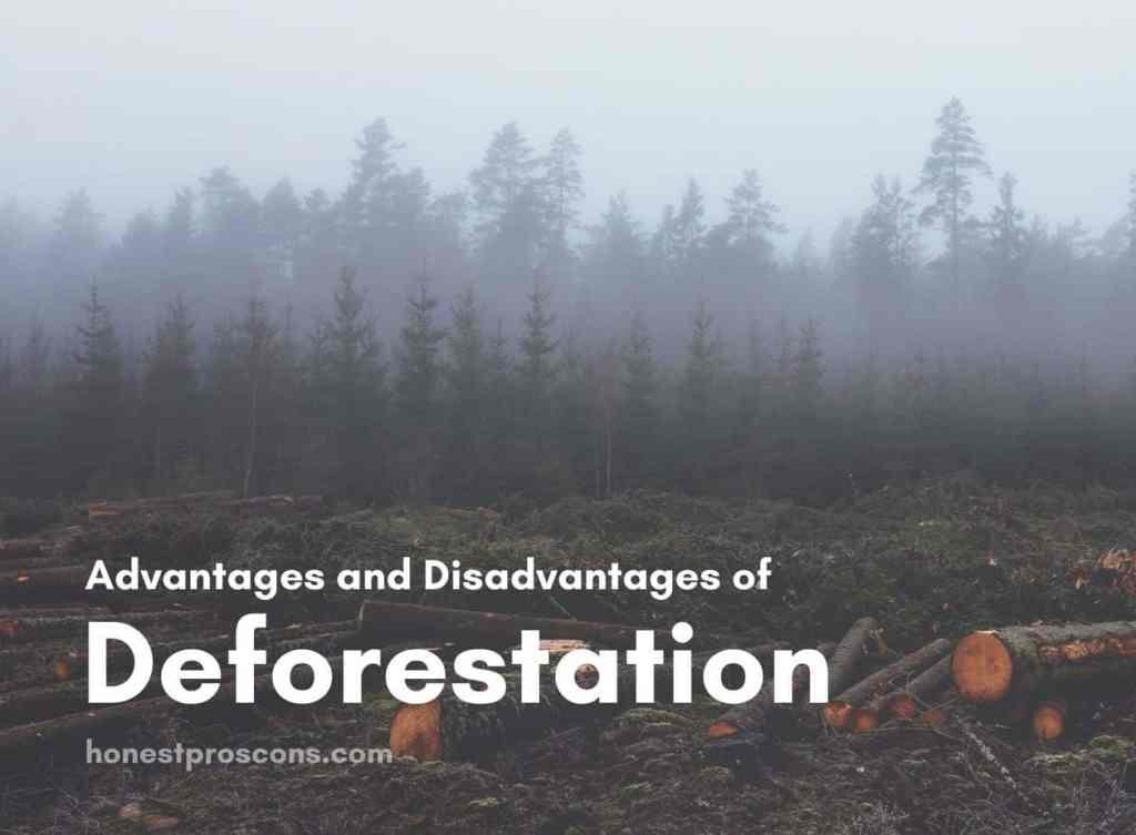 Advantages and Disadvantages of Deforestation