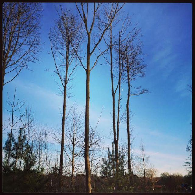 Deborah Simpson Boston HH Trees
