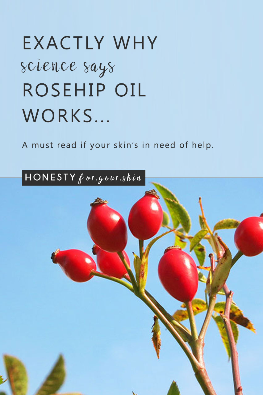 Healing properties of rose hip roots and their application