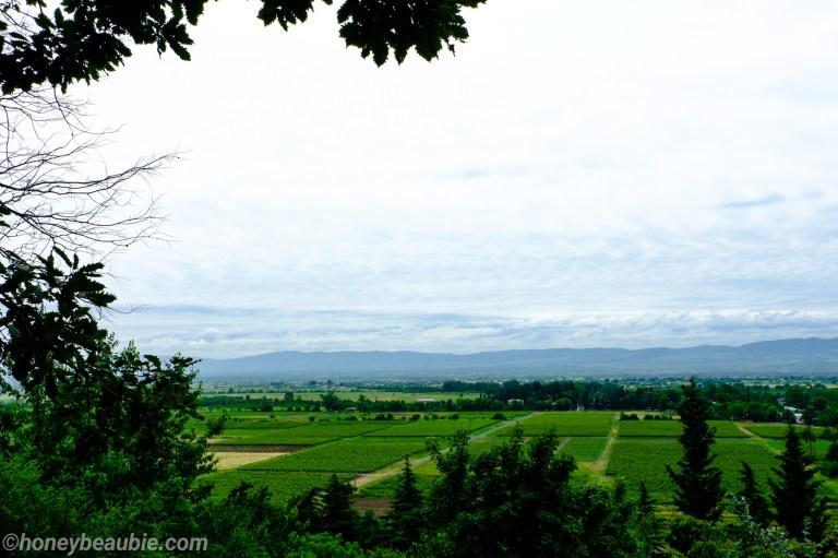 winery-khareba-restaurant-view-of-their-vineyard