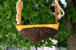 Why did my bees leave their hive?