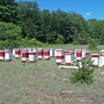 Withers Mountain Honey Farm, Near Mancelona, Michigan.