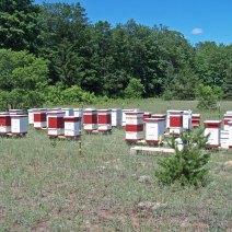 Withers Mountain Honey Farm, Near Mancelona, Michigan.