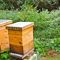 "Andy Brown of Rhode Island says, ""When you keep bees you pay a different kind of attention to the seasonal parade of flowering plants."" Notice the frost asters behind his hives."