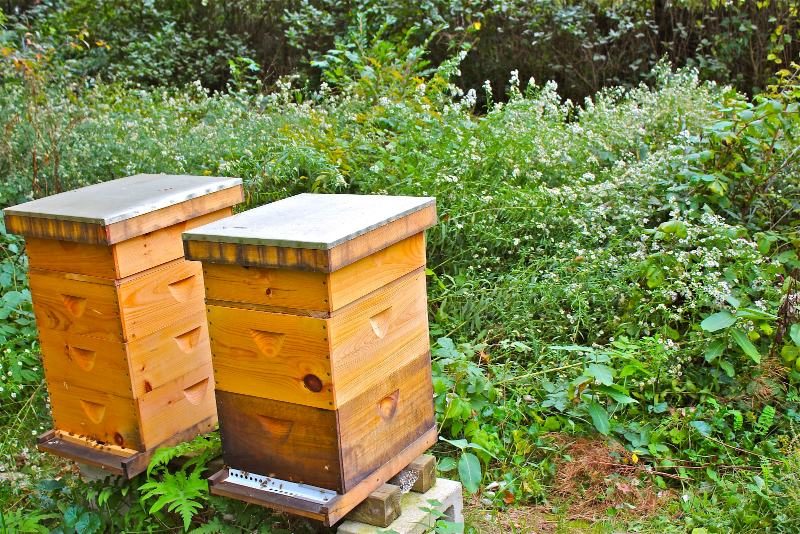 """Andy Brown of Rhode Island says, """"When you keep bees you pay a different kind of attention to the seasonal parade of flowering plants."""" Notice the frost asters behind his hives."""